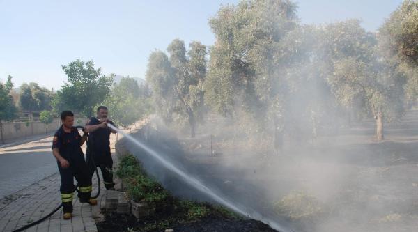 Aydın'da Zeytinlik Yangını