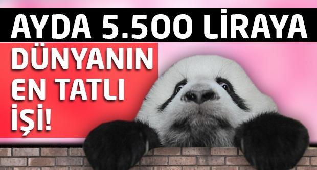 Aylık 5.500 liraya dünyanın en tatlı işi...