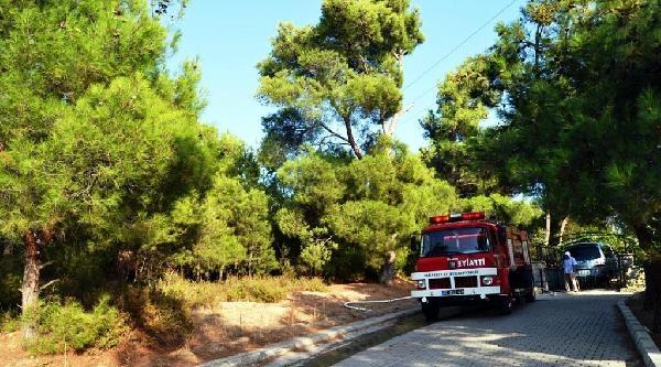 Ayvalık'taki Orman Yangını Söndürüldü
