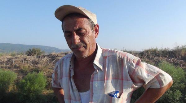 Bakırçay'da Toplu Balık Ölümleri Korkuttu