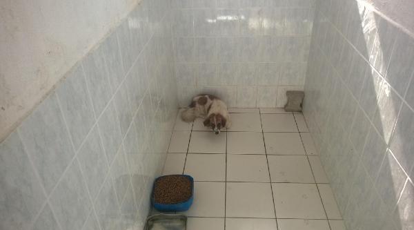 Bandırma'da 3.5 Yaşındaki Çocuğu Köpek Isirdi