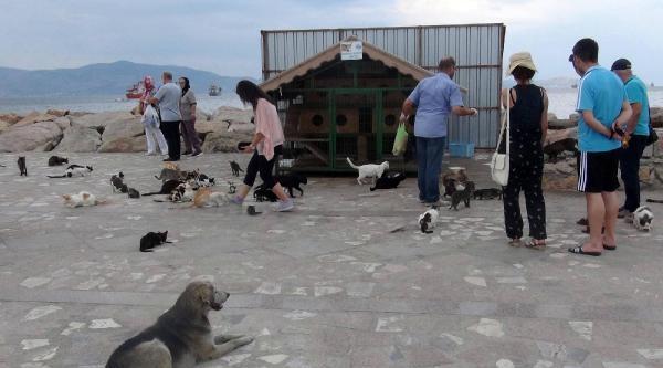 Bandırma'nın Mutlu Kedileri