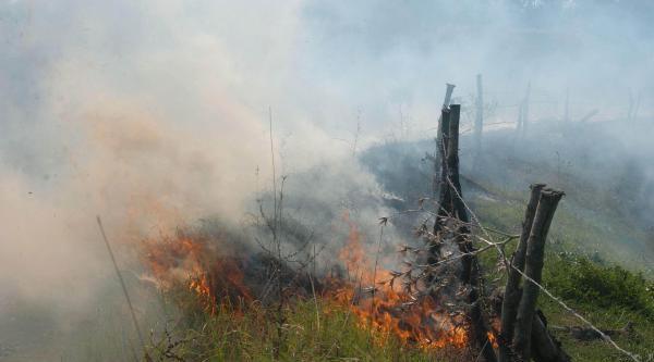 Bayramiç'teki Yangında, 10 Hektar Tarım Arazisi Zarar Gördü