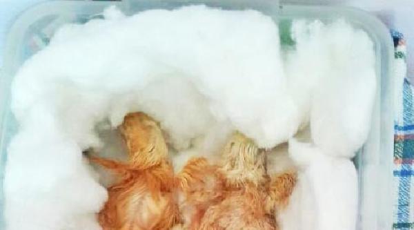 Bebeklerinden Önce 2 Civcive Sahip Oldular