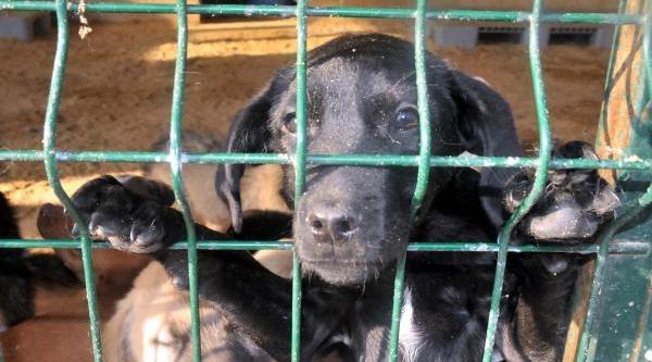 Belediye Barinaktaki Sokak Köpekleri Için Sahip Ariyor