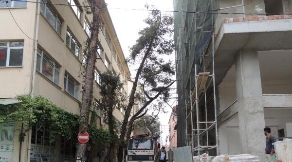 Belediye Kamu Yararına Ağaçları Kesti