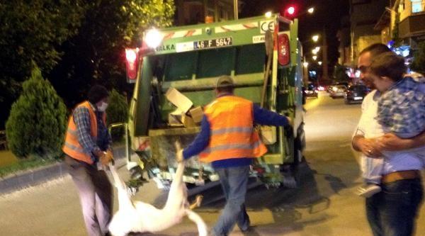 Belediyeden Sokak Köpeklerine Zehirli İğne İle İtlaf