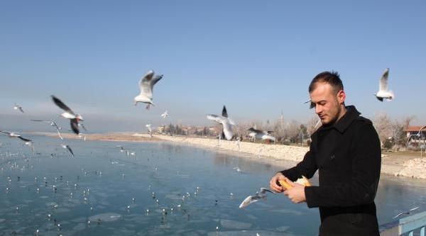 Beyşehir Gölü Dondu, Kuşlar Aç Kaldi