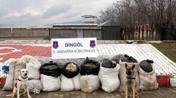 Bingöl'de 239 Kilo Esrar Ele Geçirildi