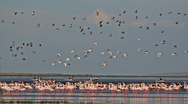 Bir Dönemin Kuş Cenneti Seyfe Gölü Çöle Döndü