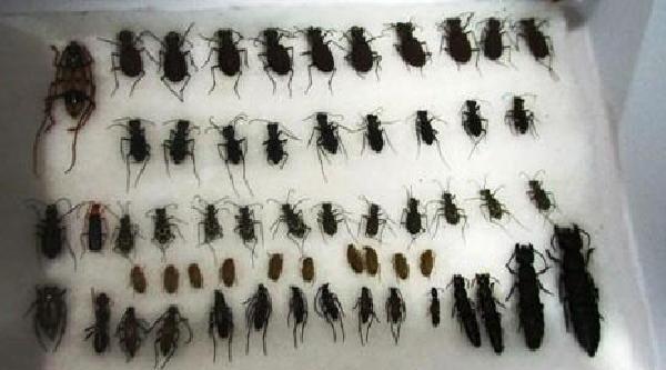 Böcek Toplayan Turiste 35 Bin Lira Ceza