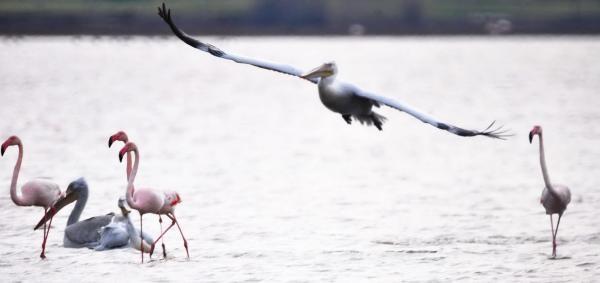 Bodrum Tuzla Sulak Alani Kuş Cennetine Döndü