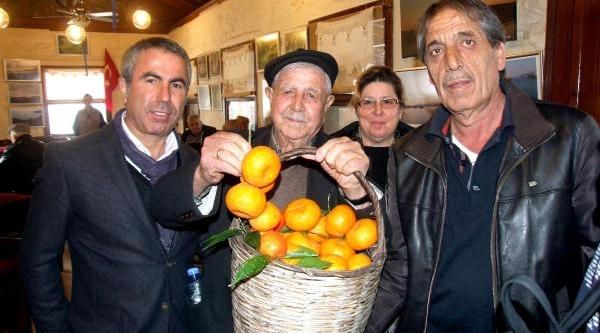 Bodrum'Da 7'nci Mandalina Festivali Başladi