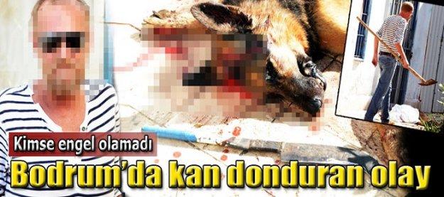 Bodrum'da kan donduran olay! Kimse engel olamadı!