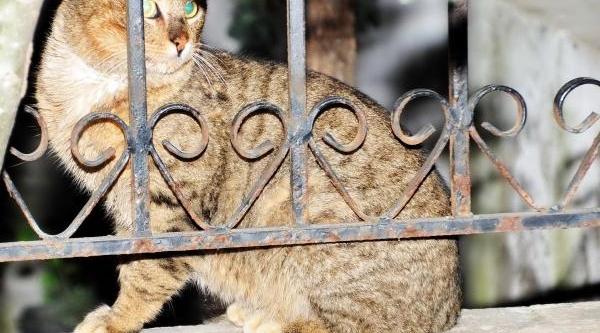 Bodrum'da Kedilere Vahşet Uygulandi