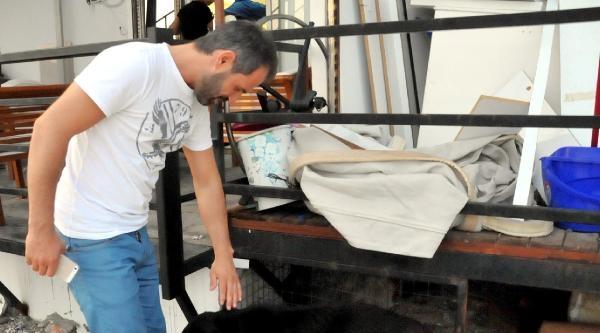 Bodrum'da Yavrularını Kanaldan Çikaran Köpek Ve Yavrularına Esnaf Sahip Çikti