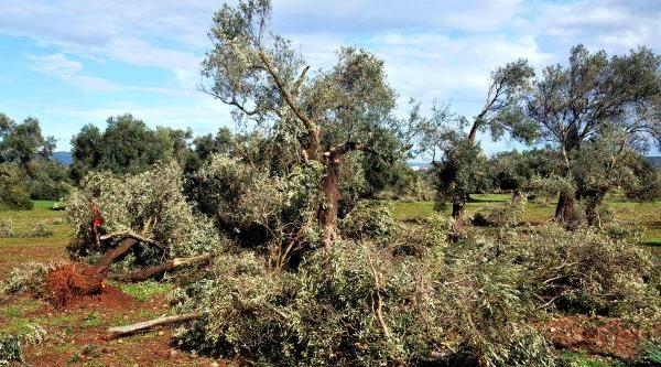 Bodrum'Un Köylerini Hortum Vurdu