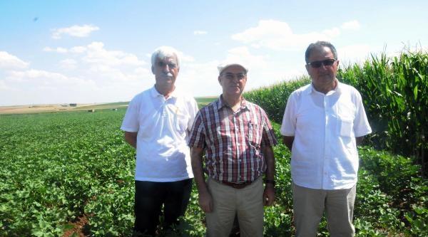 Bölge Çiftçisinden Sitem : Devlet Sanki Dedaş'ı Koruyor Gibi