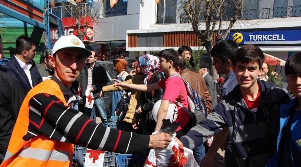 Bolu'da 5 Bin Ücretsiz Çam Fidanı Dağıtıldı