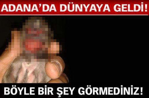 Böyle bir şey görmediniz! Adana'da dünyaya geldi!