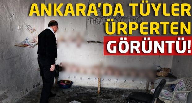Bu kadarına pes! Ankara'da tüyler ürperten görüntü!
