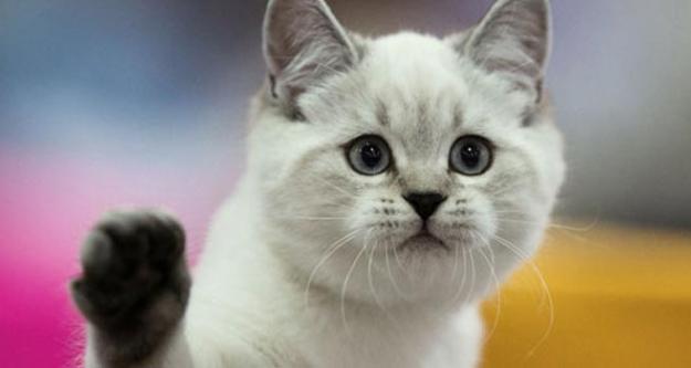 Bu Kediye Haciz Geldi!