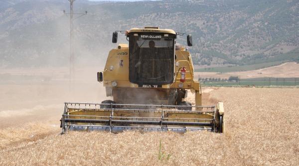 Buğday Hasadı Rekolte Düşüklüğüyle Başladı