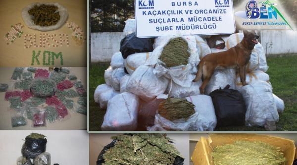 Bursa Polisinden Açıklama: 6 Ayda 1,5 Ton Esrar, 13,5 Kilo Bonzai Ele Geçirildi