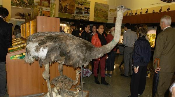 Bursa'da Hayvanbilimi Müzesi Açıldı
