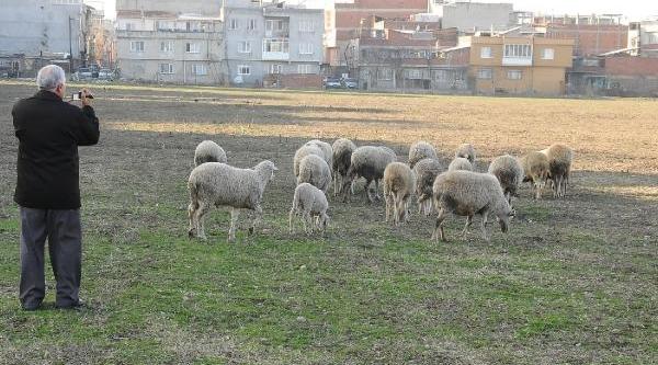 Bursa'Da Köpek Dehşeti