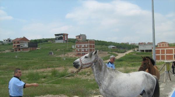 Bursa'da Zabıtadan At Operasyonu