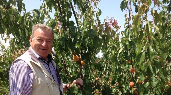 Bursa'dan Dünyaya Renkli Üzüm İhraç Edilecek