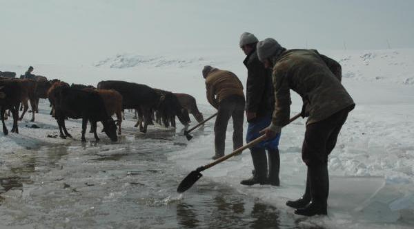 Buzu Kirip Hayvanlara Su Içiriyorlar