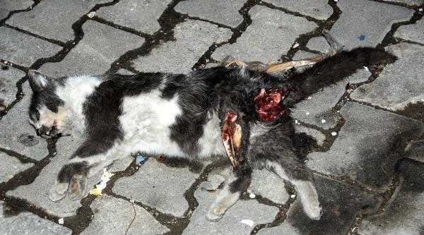 Çanakkale'de Kedi Vahşeti