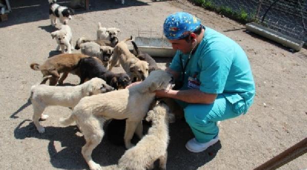 Çankiri'da 1 Ayda 4 Bin 150 Kedi-köpek Aşılandı