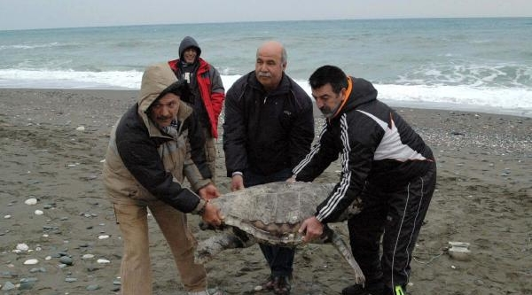 Caretta'yi Ayağina Taş Bağlayip Denize Atmişlar