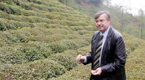Çay Ve Kiviye Don Darbesi