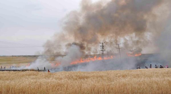 Ceylanpınar'da Arpa Tarlasında Yangın Paniği