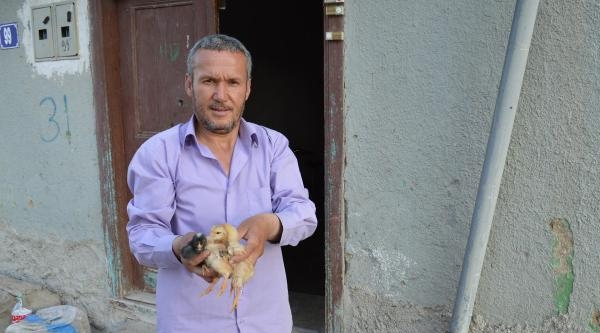 Cezaları Protesto Eden Üretici, 20 Bin Civcivi Ücretsiz Dağıttı