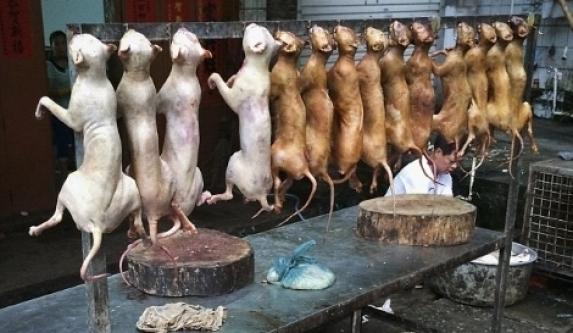 Çin'de ölümü bekleyen köpekler için son günler