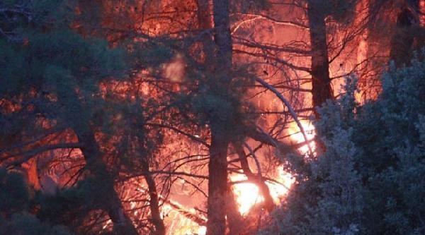Çivril'de Orman Yangını