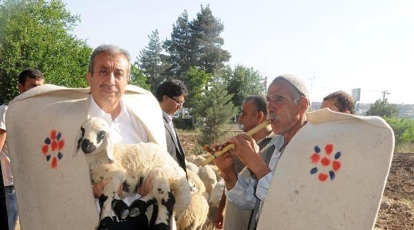 Çoban Kıyafeti Giyip Sürü Başına Geçen Bakan Eker, Gdo İle İlgili Konuşmadı