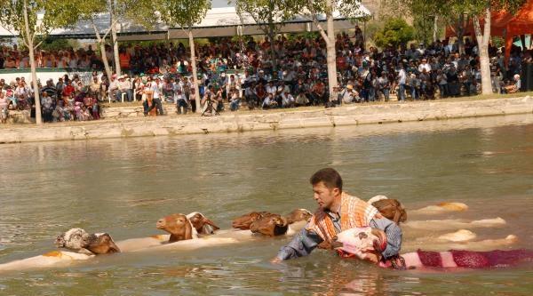 Çobanin Aşkına Saygı Yarışlarına Unesco Da Davet Edildi