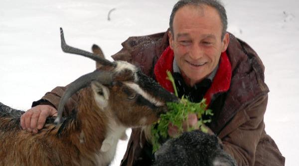 Çobanlari Kazdağlari'Ndan Kar Da Indiremiyor