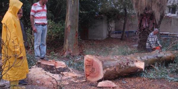 Çocuk Parkina Cami Için Ağaç Kesilmesine Tepki