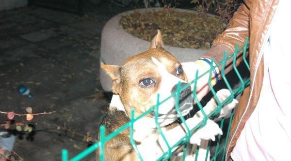 Çocuklari Korkutan Yavru Köpek Cami Avlusuna Kapatildi