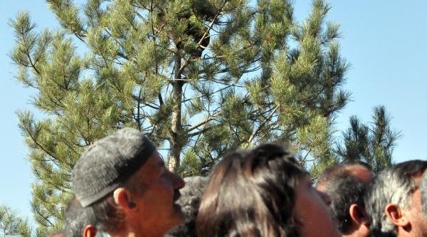 Cumhurbaşkani Gül, Ağaca Çikan 85'lik Halil Dedeyi Uyardi: Çikmak Kolay, Inmek Zordur