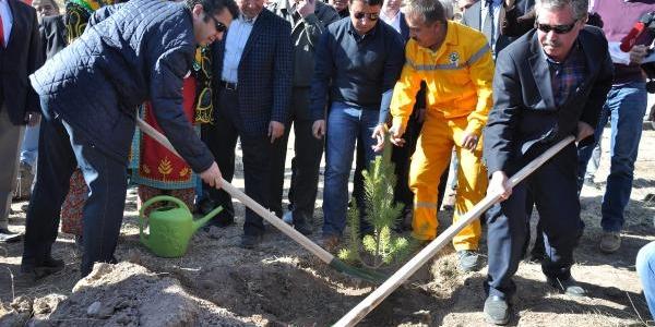Cumhurbaşkani Gül'Ün Doğum Gününde Fidan Dikildi