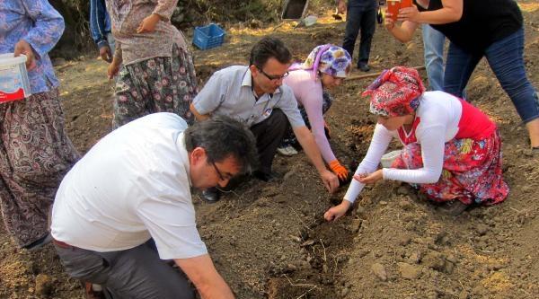 Dağ Köyündeki Göçü Safran Tarımı Önleyecek