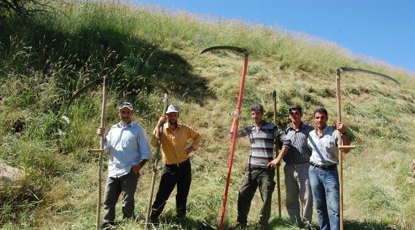 Dağlardaki Otlar İmece Usülü Biçiliyor